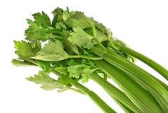 листья зеленого цвета сельдерея Стоковые Фотографии RF