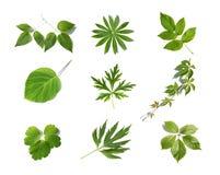 листья зеленого цвета собрания Стоковое фото RF