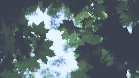 Листья зеленого цвета с красивым пирофакелом объектива видеоматериал