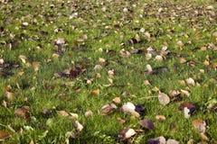 листья зеленого цвета травы Стоковое Фото