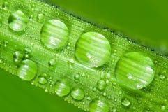 листья зеленого цвета травы dewdrops стоковая фотография