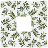 Листья зеленого цвета фисташек на белой деревянной предпосылке Стоковые Фотографии RF