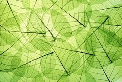 листья зеленого цвета Стоковые Изображения RF