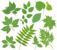 листья зеленого цвета Стоковая Фотография RF