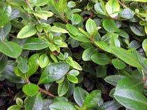 листья зеленого цвета Стоковое Изображение RF