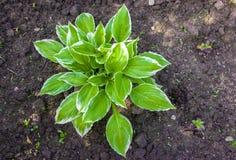 листья зеленого цвета bush стоковые изображения rf