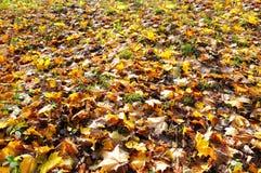 листья земли заволакивания осени Стоковая Фотография RF