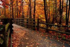 листья земли падения Стоковые Изображения