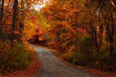 листья земли падения Стоковое фото RF