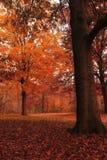 листья земли падения Стоковое Изображение RF