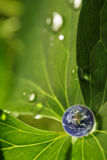 листья земли Стоковые Фотографии RF