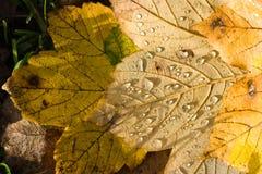 листья земли Стоковая Фотография