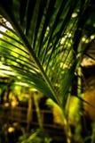 Листья зеленого растения Стоковые Фотографии RF