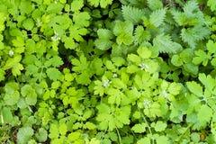 Листья зеленого цвета в парке Стоковые Фотографии RF