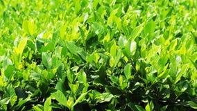 Листья зеленого цвета в парке Стоковая Фотография RF