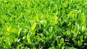 Листья зеленого цвета в парке Стоковое Изображение RF