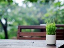 Листья зеленого цвета в чашке Стоковая Фотография