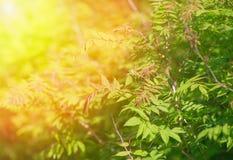 Листья зеленого цвета дерева в лете Стоковая Фотография