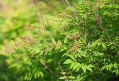 Листья зеленого цвета дерева в лете Стоковые Фотографии RF