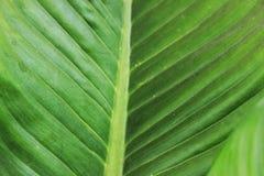 Листья зеленого цвета имеют красивые нашивки как предпосылка Стоковое фото RF