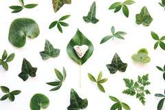 Листья зеленого цвета и каменное сердце Стоковая Фотография RF