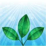 Листья зеленого цвета и sunbeams Иллюстрация штока