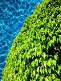 Листья зеленого цвета на бассейне Стоковое фото RF