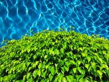 Листья зеленого цвета на бассейне Стоковые Изображения RF