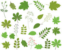 Листья зеленого цвета на белой предпосылке, листве Иллюстрация штока