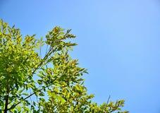 Листья зеленого цвета на небе Стоковое Фото