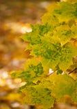 Листья зеленого цвета на оранжевой предпосылке Стоковое Фото