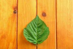 Листья зеленого цвета на предпосылке деревянного стола Взгляд сверху Стоковые Изображения