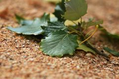 Листья зеленого цвета на предпосылке раковины Стоковая Фотография