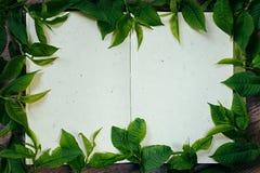 Листья зеленого цвета на пустом sketchbook Листья зеленого цвета рамки Представление Пустая тетрадь Тетрадь пробела времени весны Стоковое Изображение RF
