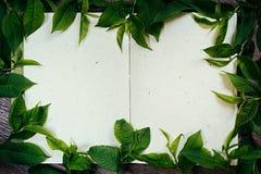 Листья зеленого цвета на пустом sketchbook Листья зеленого цвета рамки Представление Пустая тетрадь Тетрадь пробела времени весны Стоковое Изображение