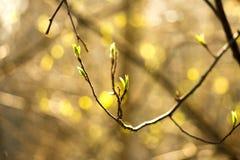 Листья зеленого цвета на солнечный день Стоковые Фотографии RF