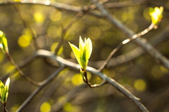 Листья зеленого цвета на солнечный день Стоковые Изображения