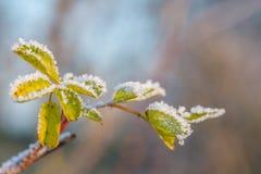 Листья зеленого цвета покрытые ледяными кристаллами Стоковые Изображения RF