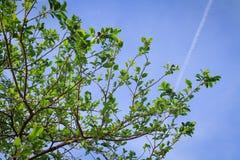 Листья зеленого цвета природы и голубое небо Стоковые Изображения