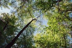 Листья зеленого цвета природы Стоковая Фотография RF