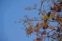 Листья зеленого цвета против неба Стоковая Фотография RF