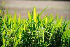 Листья зеленого цвета против яркого backlight Стоковое Изображение