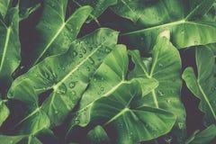 Листья зеленого цвета с орошают под солнечным светом стоковые фотографии rf