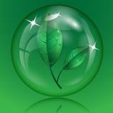 Листья зеленого цвета с падениями воды Стоковая Фотография