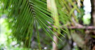 Листья зеленого цвета с падениями дождя в тропическом лесе, переводе фокуса акции видеоматериалы