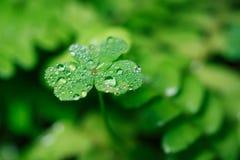 Листья зеленого цвета с падениями Стоковые Фотографии RF