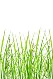Листья зеленого цвета травы леса Стоковые Изображения RF