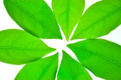 Листья зеленого цвета травы леса Стоковая Фотография