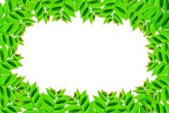 Листья зеленого цвета травы леса Стоковое Изображение