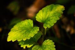 Листья зеленого цвета травы Стоковые Изображения RF